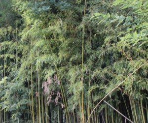 Sommerpause: Tarzan