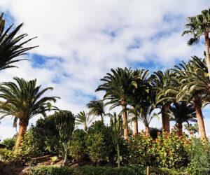 Las plantas de las islas canarias
